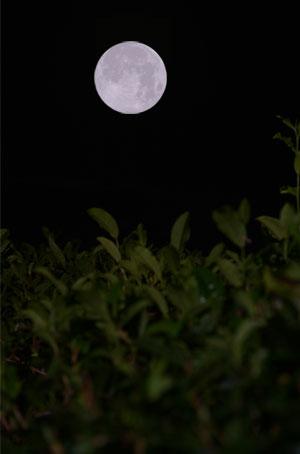 moon_04_pic_fullmoon_greentea